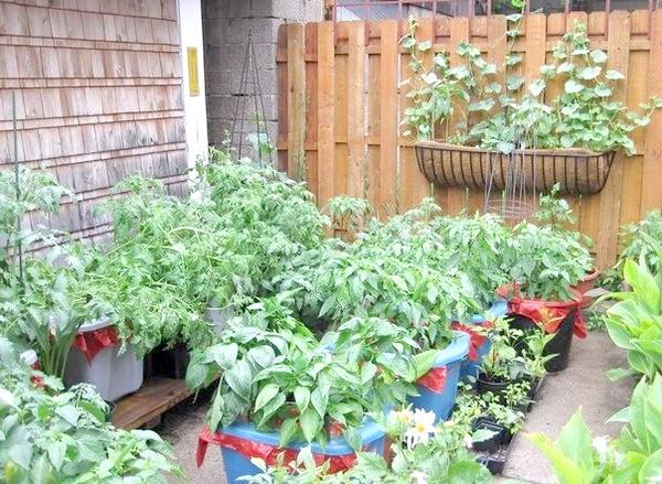 Сад в контейнері