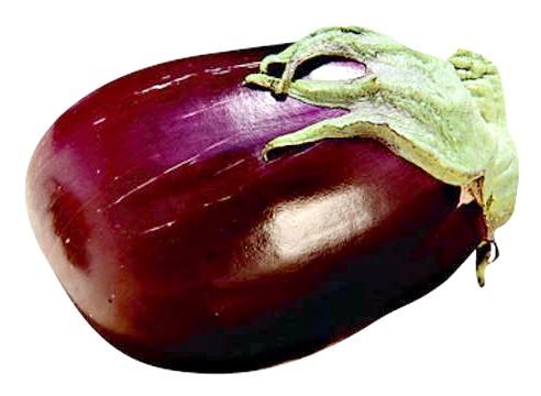 Баклажан сорти Альбатрос, Solanum melongena