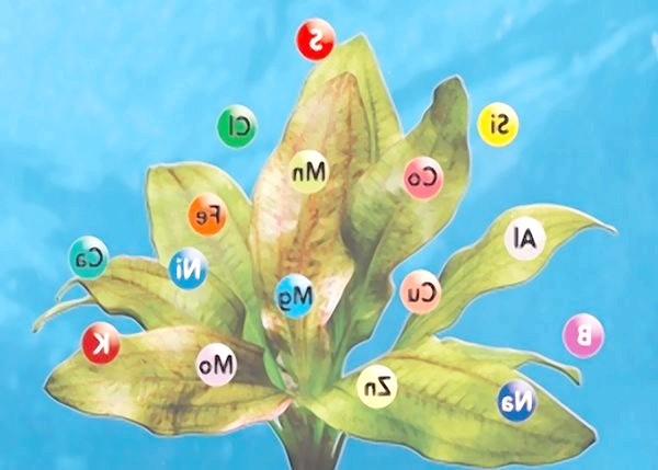 Фото - Добрива: вітаміни для зелених вихованців