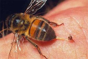 Вкусила бджола, оса, кліщ комар, мошка на дачі, що робити, допомога