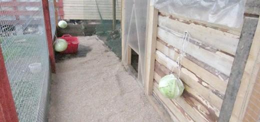 Фотографія вигулу для індо качок, fermer.ru