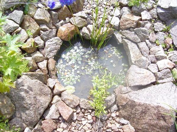 Водойма