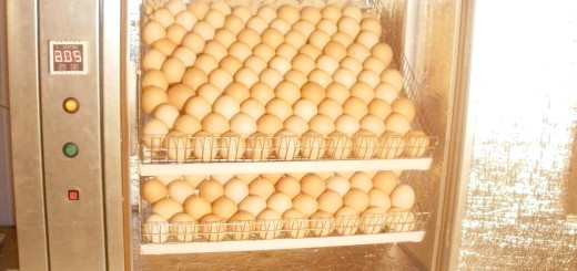 Фотографія інкубатора для яєць, buyreklama.ru