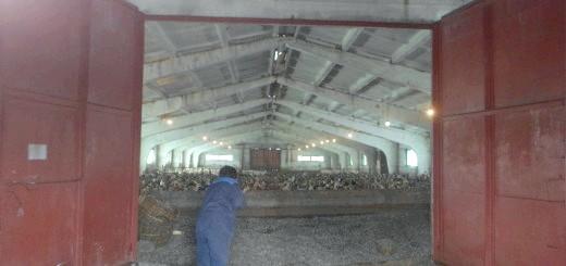 На фото качки в приміщенні, img-fotki.yandex.ru