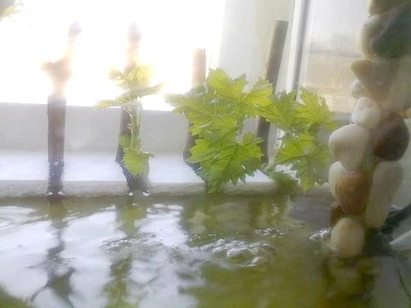 Пінопластовий місток в акваріумі