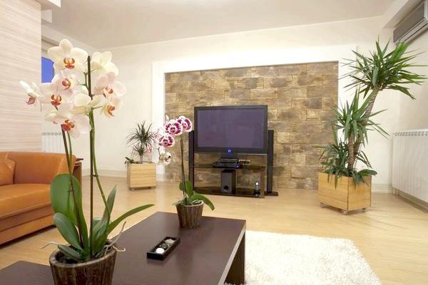 рослини у вітальні