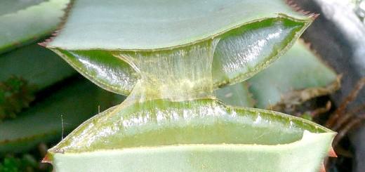 Гель з листя