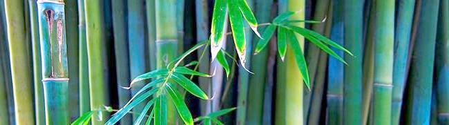 Фото - Бамбукова пальма та інші види тропічних рослин з докладними описами