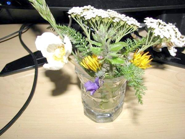 Зимові квіти