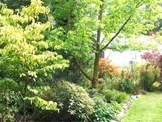 Швидкорослі дерева і чагарники