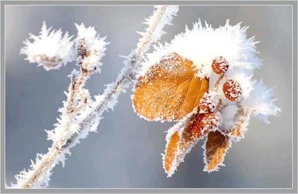Вільха взимку. Фото з сайту mediasubs.ru