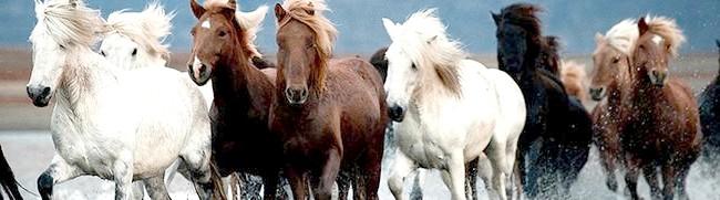 Види зверху кількох коней, daypic.ru