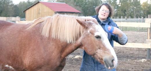 Частка коні, rashel.spb.ru