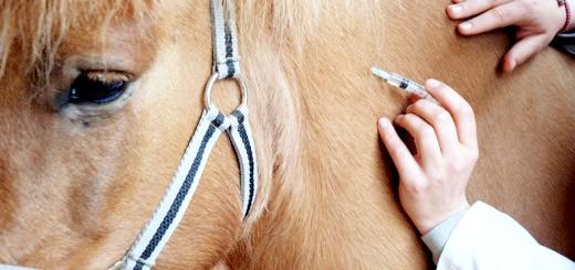 Вакцинація коні, expertanimals.com
