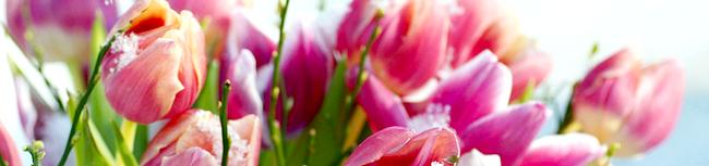 Фото - Як посадити тюльпани в квітковий горщик, щоб отримати пишний букет до свята