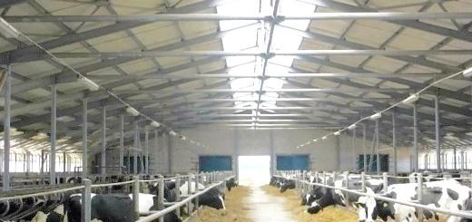 Коров'яча ферма, nfmoloko.ru