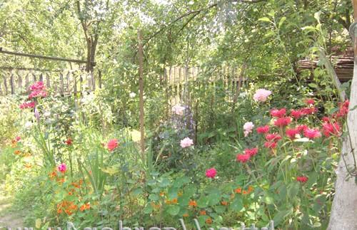 Фото - Що робити навесні і влітку в екосаду і городі