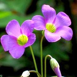 Фото - Цитати про квіти