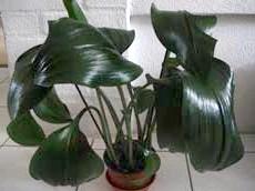 Фото - Декоративно-листяні рослини