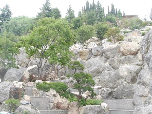 Японський сад (вид знизу)