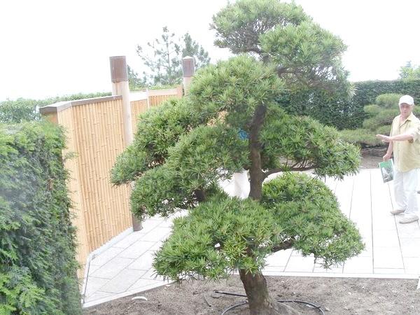 Головний вхід в японський сад