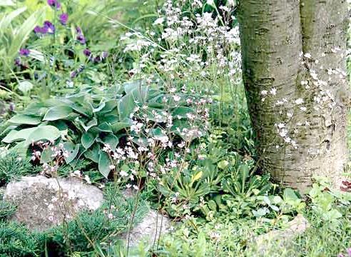 Тінистий квітник