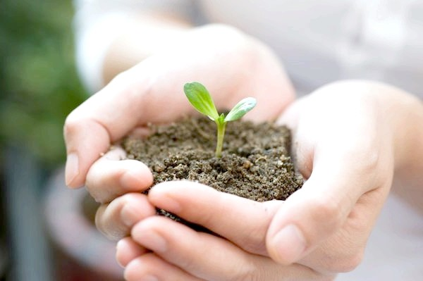 Фото - Як підготувати грунт для розсади