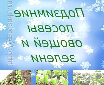 Фото - Як отримати ранній урожай? подзимний посів вам в помощь!