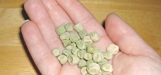 На фото висушені насіння гороху, pad2.whstatic.com