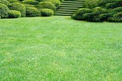 Фото - Як правильно зробити газон без допомоги фахівців