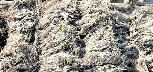 Зображення ящиків з розсадою полуниці, blogspot.com