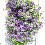 Фото - Як зробити шпалеру для витких рослин.
