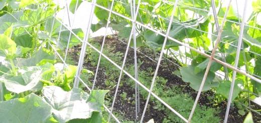 Огорожа для огірків, gardeners.com