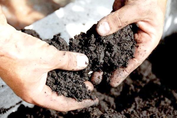 Фото - Як дізнатися тип ґрунту, і навіщо це потрібно