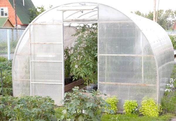 Фото - Як захистити рослини в теплицях від перегріву