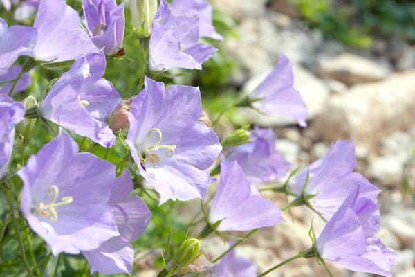 Фото - Які квіти треба сіяти на розсаду в січні