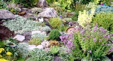 Фото - Які рослини вибрати для альпійської гірки