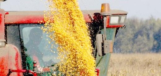 Збирання кукурудзи на зерно, zerno-ua.com