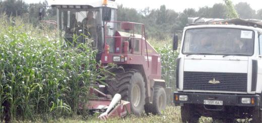 Збирання кукурудзи на силос, lioznonews.by