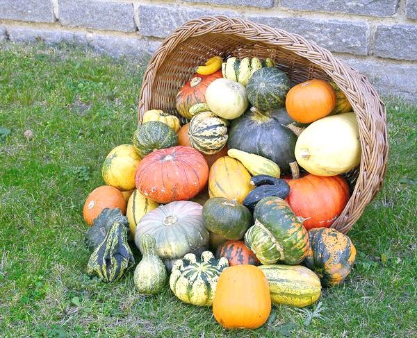 Терміни дозрівання гарбуза пишуть на упаковках з насінням