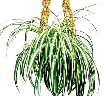 Фото - Кімнатні рослини очищають повітря