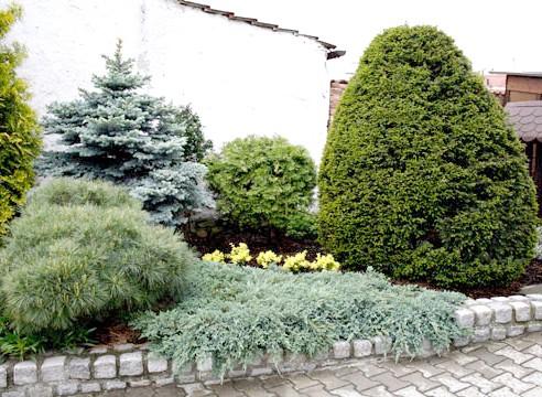 Фото - Композиції з хвойних рослин