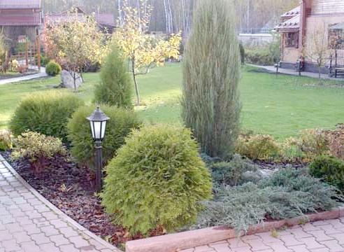 Садова композиція з хвойними