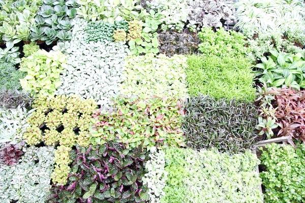 Ущільнені посіви і посадки