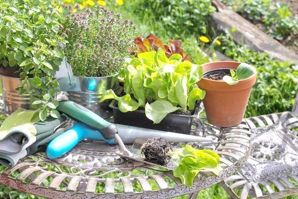 Не забувайте підгодовувати овочі і трави в горщиках