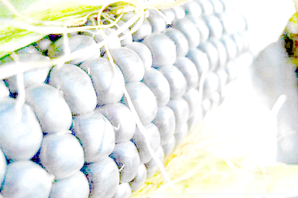 Кулебяка з капустою і яйцем