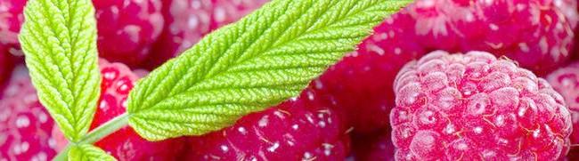 Ягоди малини, best-desktop.info