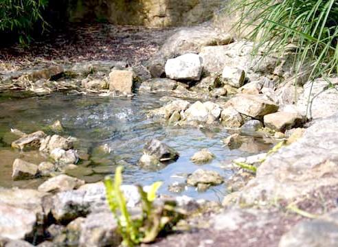 Мініатюрний водойма на ділянці