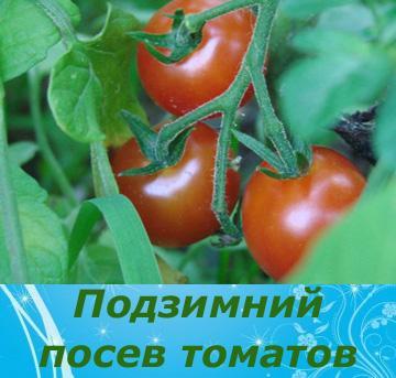 Фото - Чи можна сіяти помідори під зиму