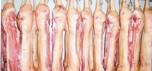 Туші свиней породи Петрен, meatinfo.ru